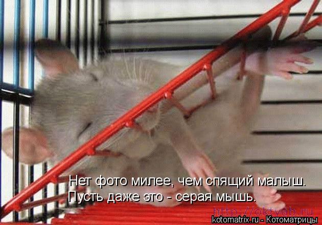 Котоматрица: Нет фото милее, чем спящий малыш. Пусть даже это - серая мышь.