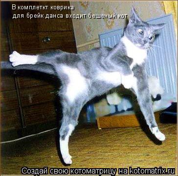 Котоматрица: В комплеткт коврика В комплеткт коврика  для брейк данса входит бешеный кот