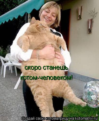 Котоматрица: скоро станешь  котом-человеком!