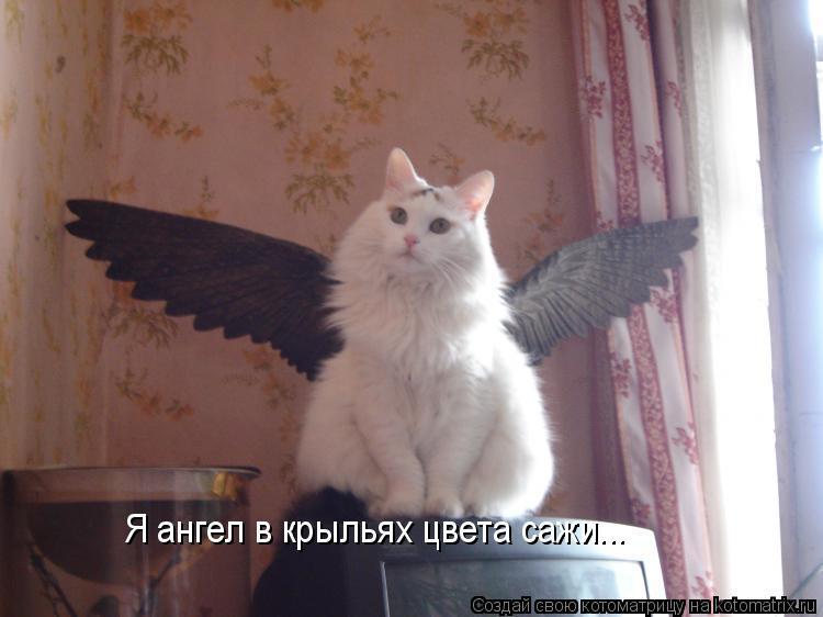 Котоматрица: Я ангел в крыльях цвета сажи...