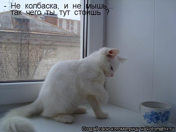 Котоматрица: -  Не  колбаска,  и  не  мышь...  так  чего  ты  тут  стоишь  ?
