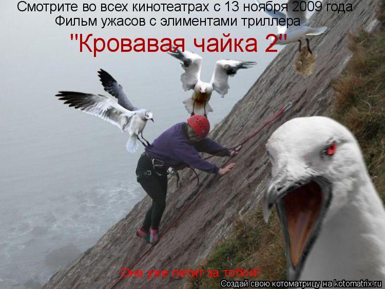 """Котоматрица: Смотрите во всех кинотеатрах с 13 ноября 2009 года Фильм ужасов с элиментами триллера """"Кровавая чайка 2"""" Она уже летит за тобой!"""