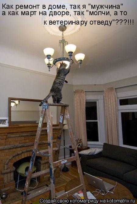 """Котоматрица: Как ремонт в доме, так я """"мужчина"""" а как март на дворе, так """"молчи, а то к ветеринару отведу""""???!!!"""