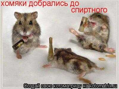 Котоматрица: хомяки добрались до  спиртного