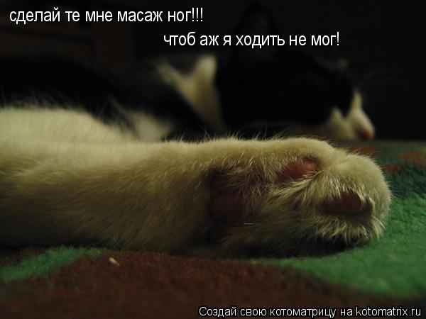 Котоматрица: сделай те мне масаж ног!!! чтоб аж я ходить не мог!