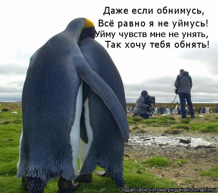 Котоматрица: Даже если обнимусь, Всё равно я не уймусь! Уйму чувств мне не унять, Так хочу тебя обнять!