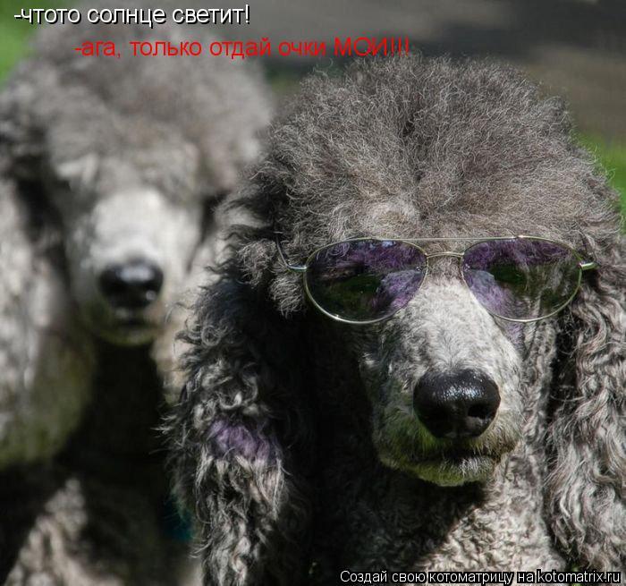 Котоматрица: -чтото солнце светит! -ага, только отдай очки МОИ!!! -чтото солнце светит!