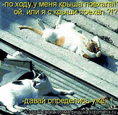Котоматрица: -по ходу у меня крыша поехала!?! ой, или я с крыши поехал ?!? -давай определись уже...!