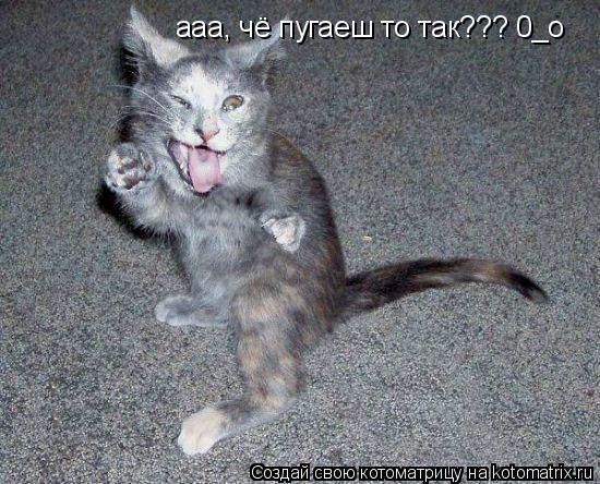 Котоматрица: ааа, чё пугаеш то так??? 0_o