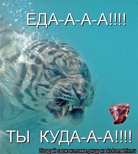 Котоматрица: ЕДА-А-А-А!!!! ТЫ  КУДА-А-А!!!!