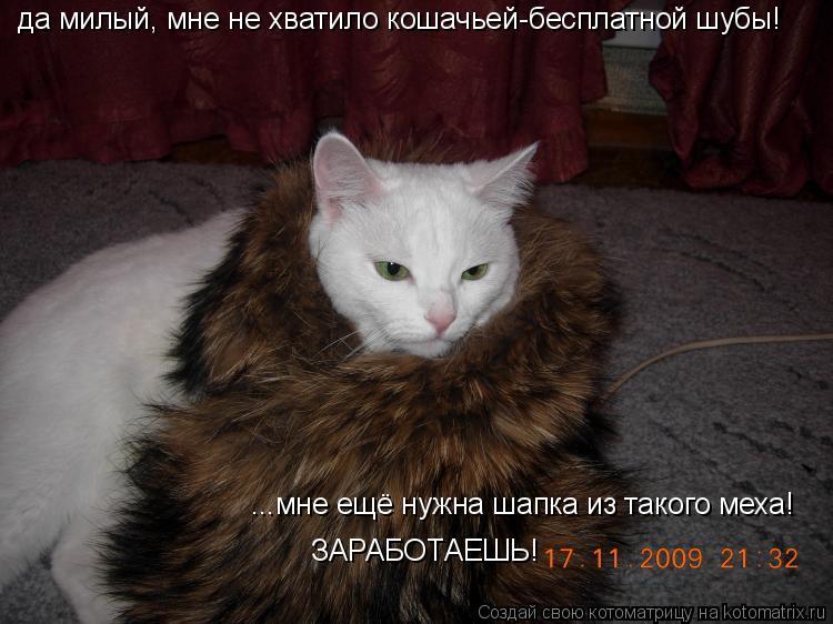 Котоматрица: да милый, мне не хватило кошачьей-бесплатной шубы! ...мне ещё нужна шапка из такого меха! ЗАРАБОТАЕШЬ!