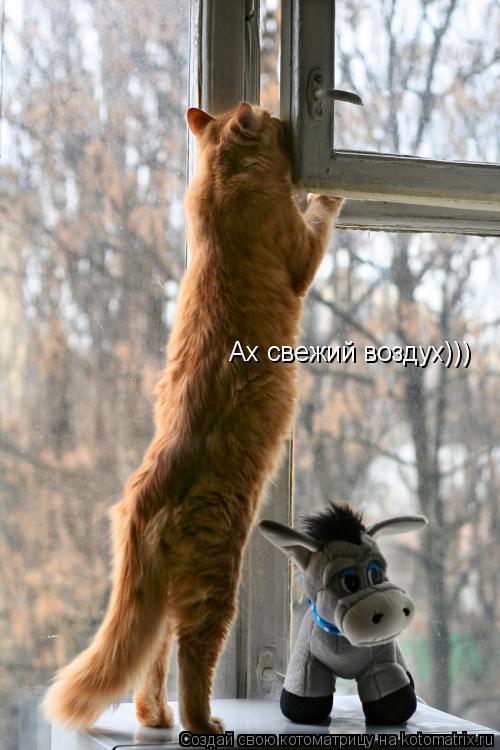 Котоматрица: Ах свежий воздух)))