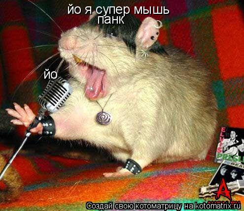 Котоматрица: йо йо я супер мышь панк