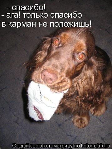 Котоматрица: - спасибо! - ага! только спасибо в карман не положишь!