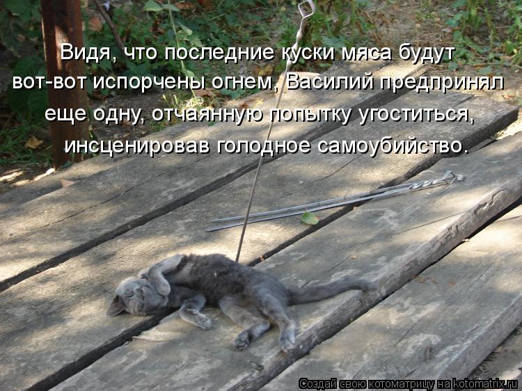 Котоматрица: Видя, что последние куски мяса будут вот-вот испорчены огнем, Василий предпринял еще одну, отчаянную попытку угоститься, инсценировав голо