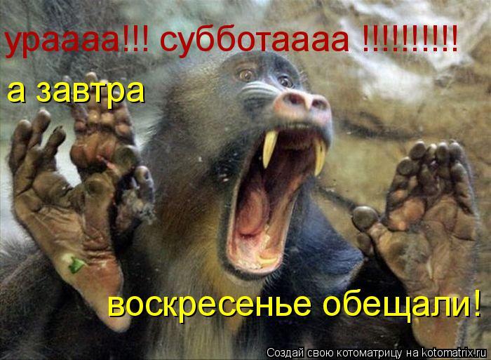 Котоматрица: ураааа!!! субботаааа !!!!!!!!!! а завтра воскресенье обещали!