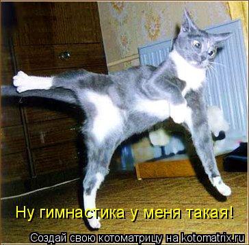 Котоматрица: Ну гимнастика у меня такая!
