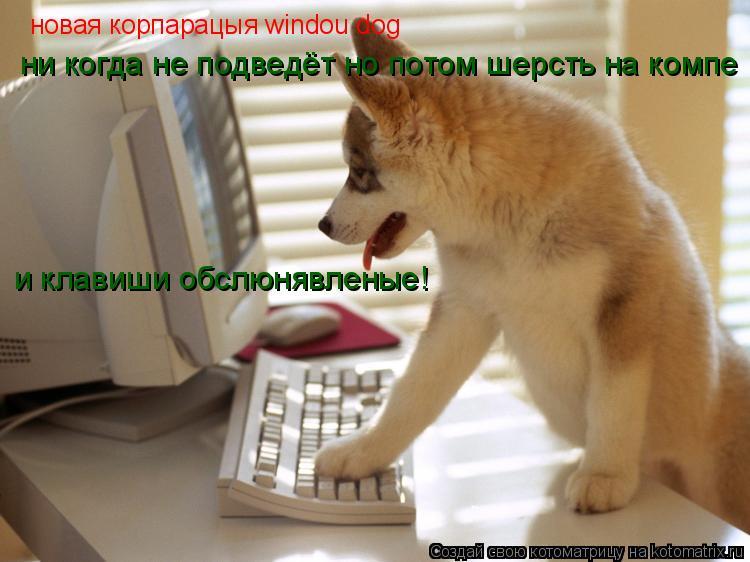 Котоматрица: новая корпарацыя windou dog ни когда не подведёт но потом шерсть на компе и клавиши обслюнявленые!