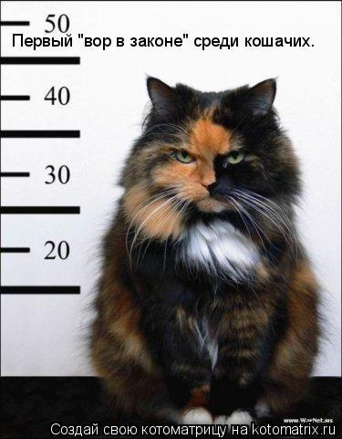 """Котоматрица: Первый """"вор в законе"""" среди кошачих."""