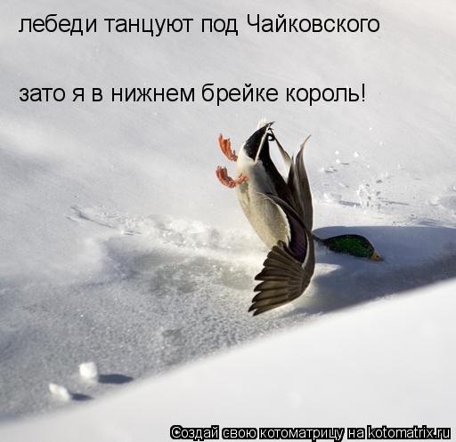 Котоматрица: лебеди танцуют под Чайковского зато я в нижнем брейке король!