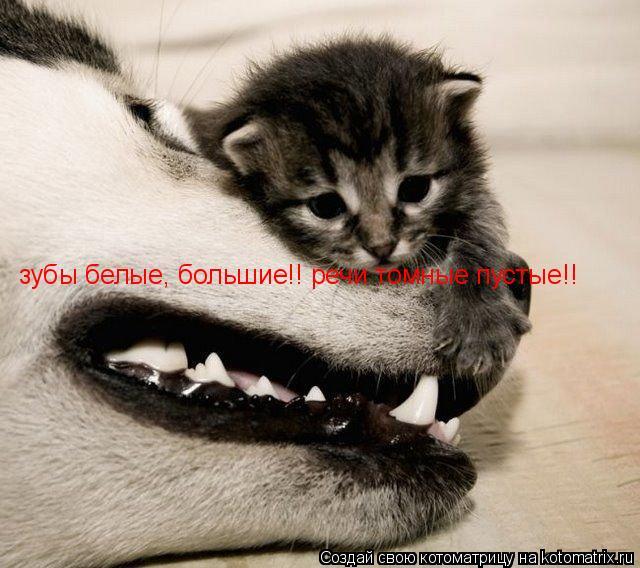 Котоматрица: зубы белые, большие!! речи томные пустые!!