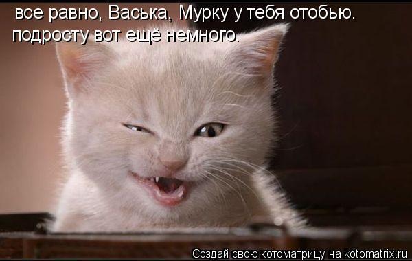 Котоматрица: все равно, Васька, Мурку у тебя отобью. подросту вот ещё немного.