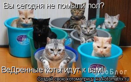 Котоматрица: Вы сегодня не помыли пол? ВеДренные коты идут к вам!