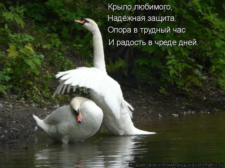 Котоматрица: Крыло любимого, Надёжная защита. Опора в трудный час И радость в чреде дней.