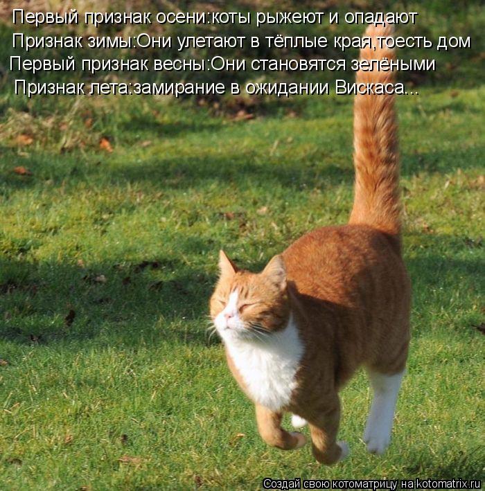 Котоматрица: Первый признак осени:коты рыжеют и опадают Признак зимы:Они улетают в тёплые края,тоесть дом Первый признак весны:Они становятся зелёными