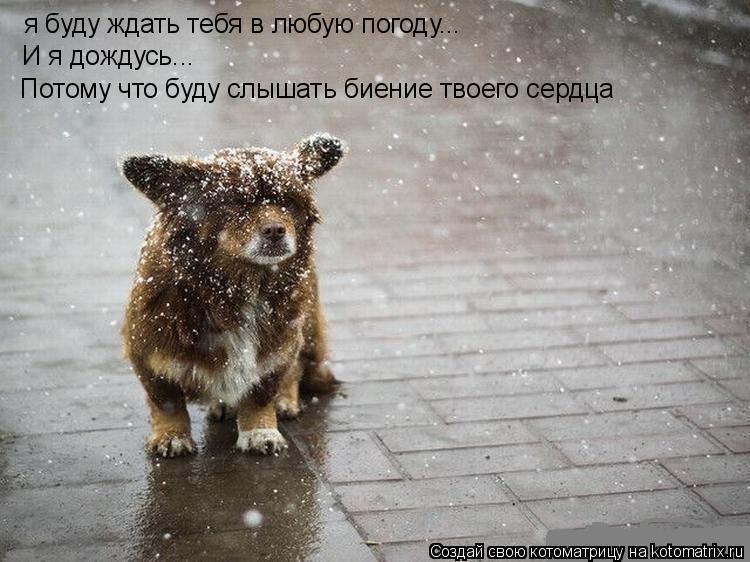 Котоматрица: я буду ждать тебя в любую погоду... И я дождусь... Потому что буду слышать биение твоего сердца