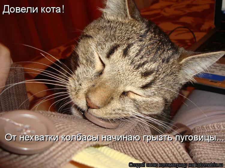 Котоматрица: Довели кота! От нехватки колбасы начинаю грызть пуговицы...