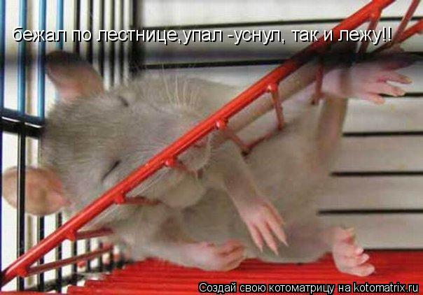 Котоматрица: бежал по лестнице,упал -уснул, так и лежу!!