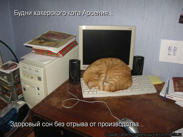 Котоматрица: Будни хакерского кота Арсения... Здоровый сон без отрыва от производства...