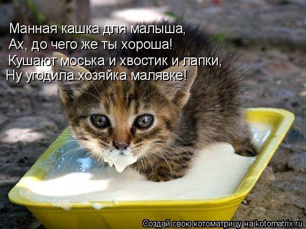 Котоматрица: Манная кашка для малыша, Ах, до чего же ты хороша! Кушают моська и хвостик и лапки, Ну угодила хозяйка малявке!