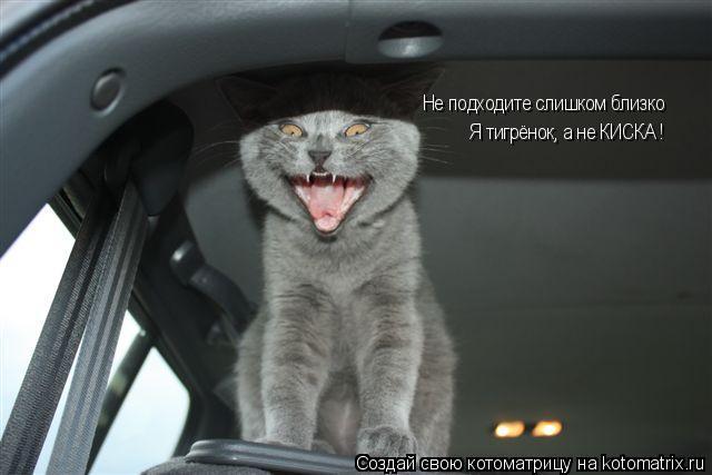 Котоматрица: Не подходите слишком близко Я тигрёнок, а не КИСКА ! Не подходите слишком близко