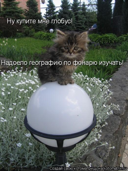 Котоматрица: Ну купите мне глобус! Надоело географию по фонарю изучать!