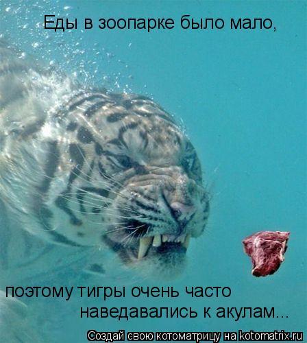 Котоматрица: Еды в зоопарке было мало, поэтому тигры очень часто  наведавались к акулам...
