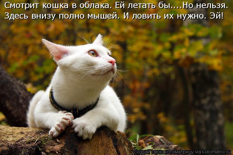 Котоматрица: Смотрит кошка в облака. Ей летать бы....Но нельзя. Здесь внизу полно мышей. И ловить их нужно. Эй!