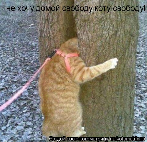 Котоматрица: не хочу домой свободу коту-свободу!!!!!!!!!!