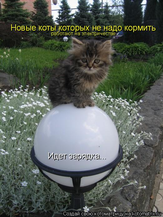 Котоматрица: Идет зарядка... Новые коты которых не надо кормить работают на электричестве