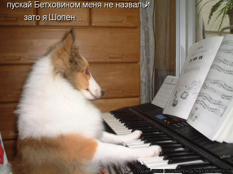Котоматрица: пускай Бетховином меня не назваль и зато я Шопен...