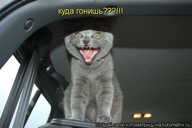 Котоматрица: куда гонишь???!!!