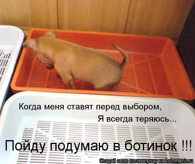 Котоматрица: Когда меня ставят перед выбором, Я всегда теряюсь... Пойду подумаю в ботинок !!!