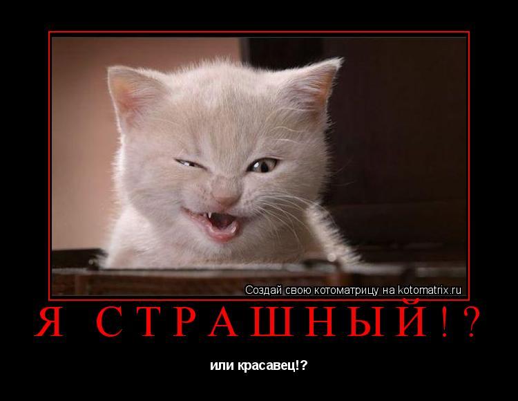 Котоматрица: Я страшный!? или красавец!?