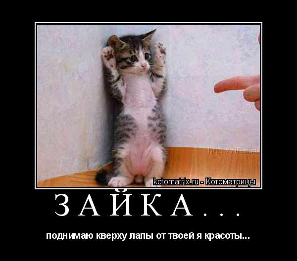 Котоматрица: Зайка... поднимаю кверху лапы от твоей я красоты...