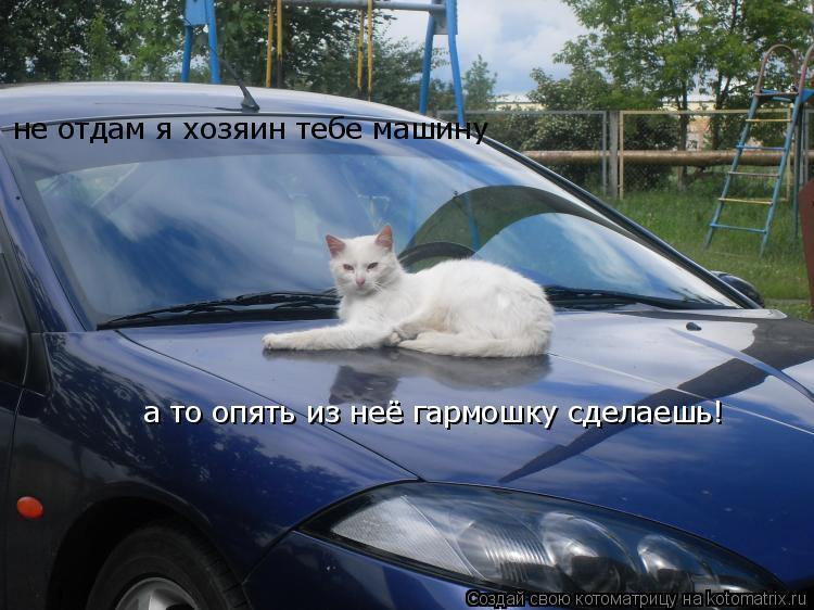 Котоматрица: не отдам я хозяин тебе машину а то опять из неё гармошку сделаешь!