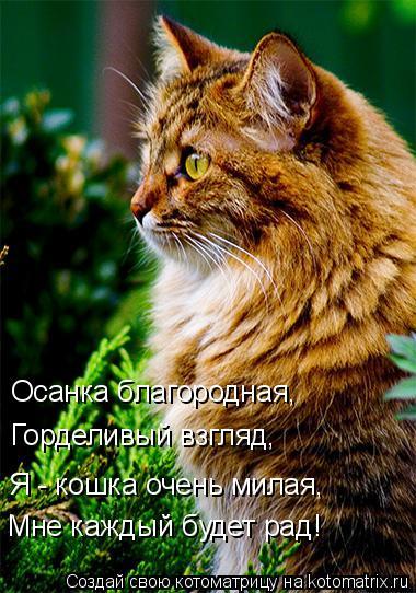 Котоматрица: Осанка благородная, Горделивый взгляд, Я - кошка очень милая, Мне каждый будет рад!