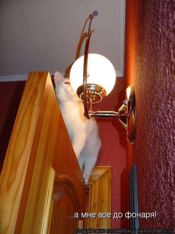 Котоматрица: ...а мне все до фонаря!