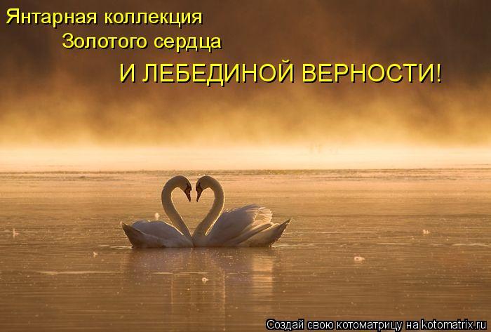 Котоматрица: Янтарная коллекция  Янтарная коллекция  Золотого сердца  И ЛЕБЕДИНОЙ ВЕРНОСТИ!
