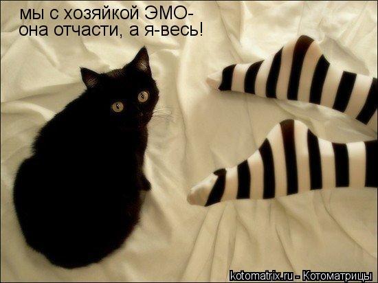 Котоматрица: мы с хозяйкой ЭМО- она отчасти, а я-весь!